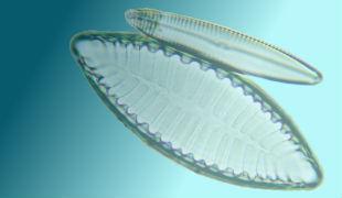 プランクトン通信のイメージ